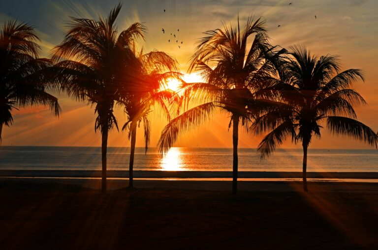 the sun sets behind some palm trees on miami beach